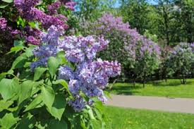 home, memoir, mother, family, south, grandmother, lilacs, autobiography